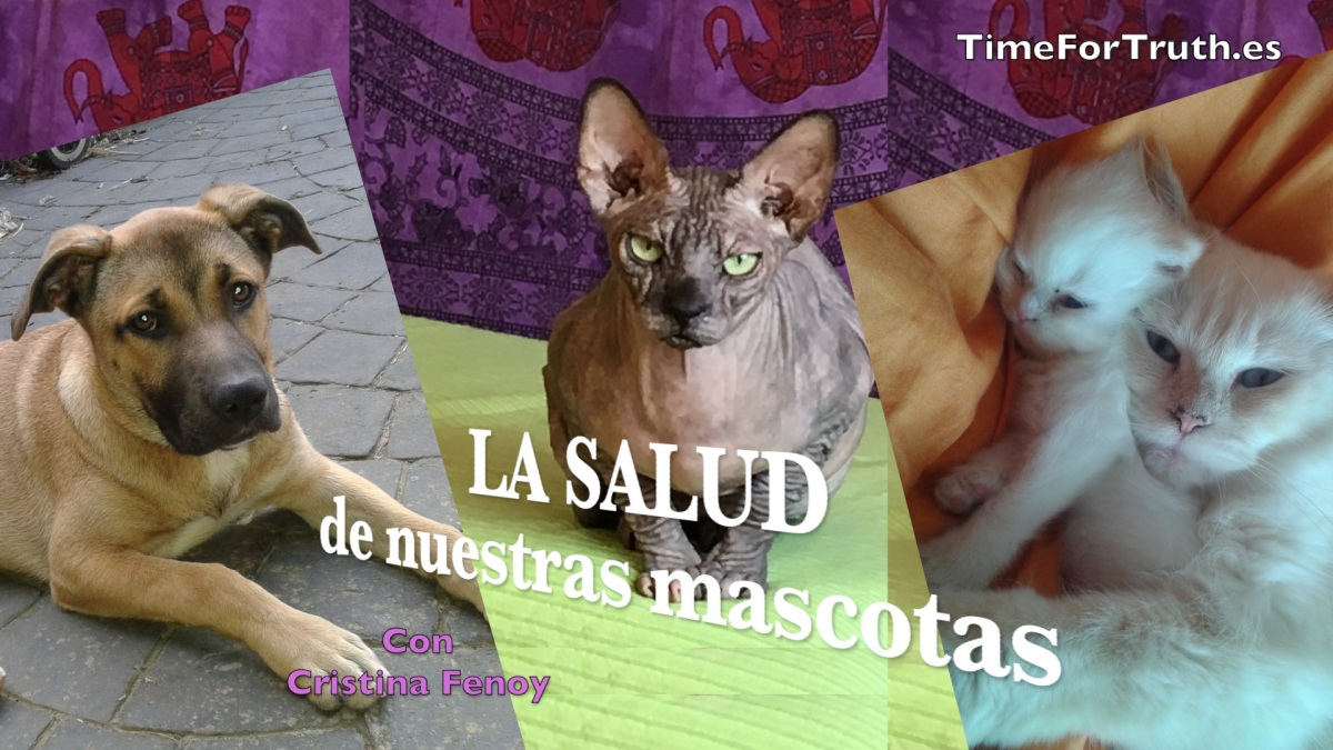 LA SALUD DE NUESTRAS MASCOTAS - Con Cristina Fenoy